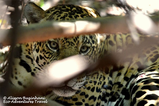 04 Days Pantanal Expedition, Miranda River Adventure Tours - 2017
