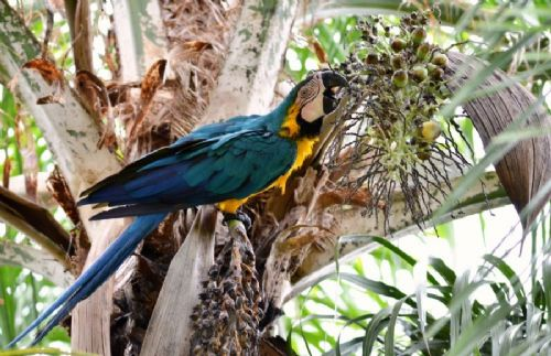 Aguapé Pantanal Trip - 3 Nights / 04 Days