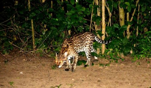 Pantanal & Bonito Eco Trip (PA) - 06 nights / 07 days
