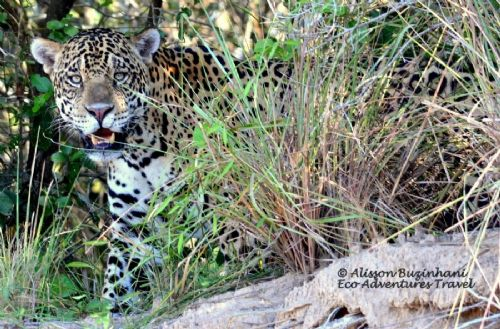 Custom Pantanal Tours - 5 days