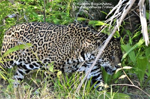 Wildlife Pantanal Tours - Barranco Alto Lodge