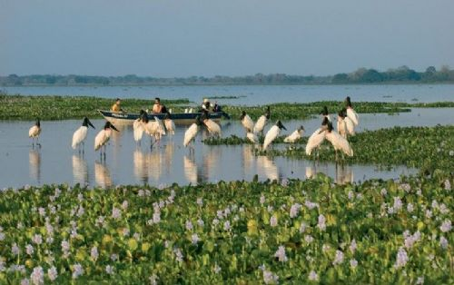 4 Days Tours Northern Pantanal - Piuval Lodge
